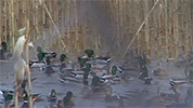 hunter-nation-hunt-sweepstakes-27-idaho-mallard-duck-hunt-hagerman-wings-farm-01-178