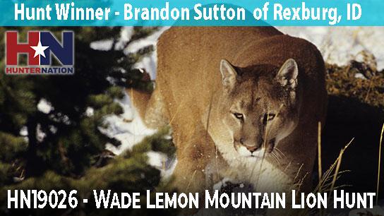 HN19026-Wade-Lemon_Mountain-Lion_544