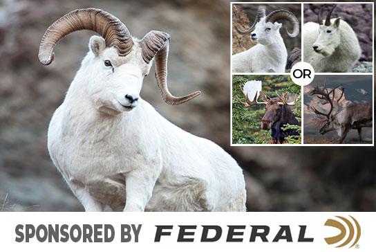 hunter-nation-dream-hunt-2020-02-federal-ammunition-choice-hunt-dall-sheep-01b-544