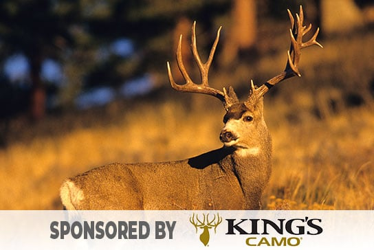 hunter-nation-dream-hunt-2020-05-kings-camo-mule-deer-hunt-01-544