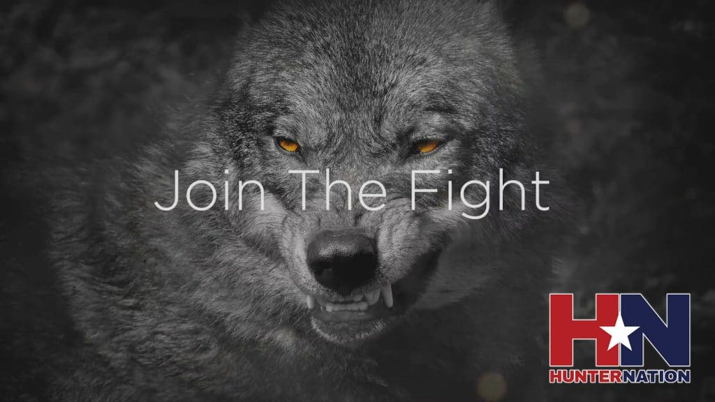Hunter Nation - Responsible Predator Management - Join the Fight Delisting the Grey Wolf